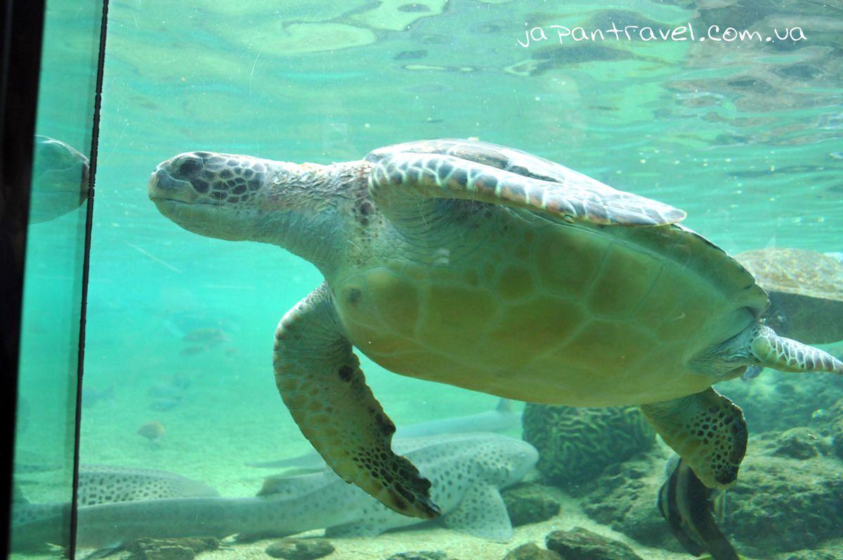 йокогама-акваріум-морська-чрепаха-мандрівки-японією