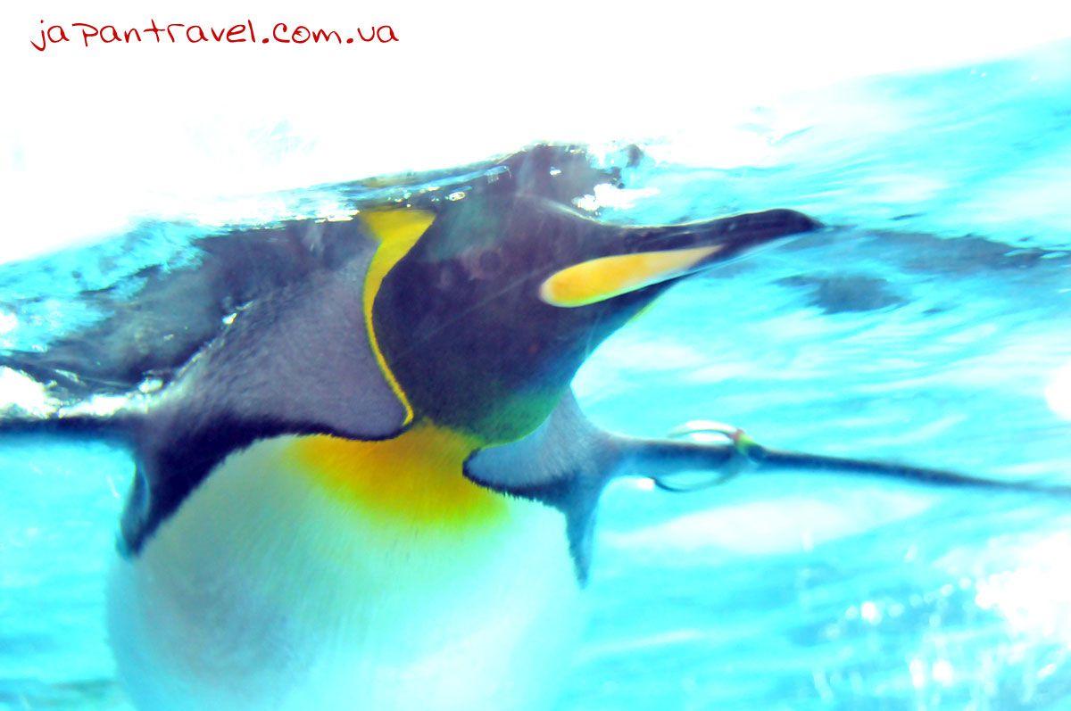 йокогама-акваріум-пінгвін-мандрівки-японією