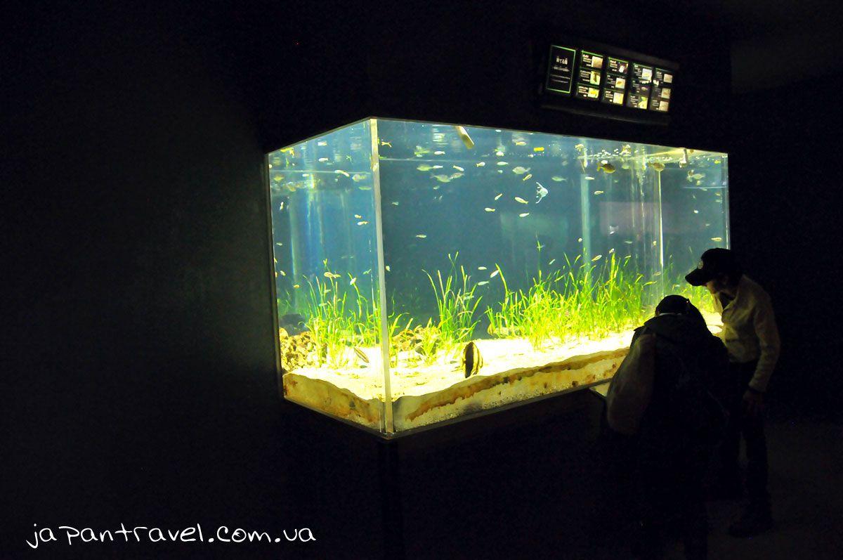 йокогама-океанаріум-акваріум-мандрівки-японією