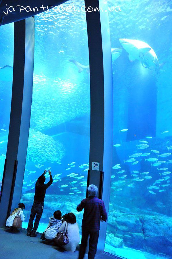 йокогама-сіперадайз-океанаріум-акула-мандрівки-японією