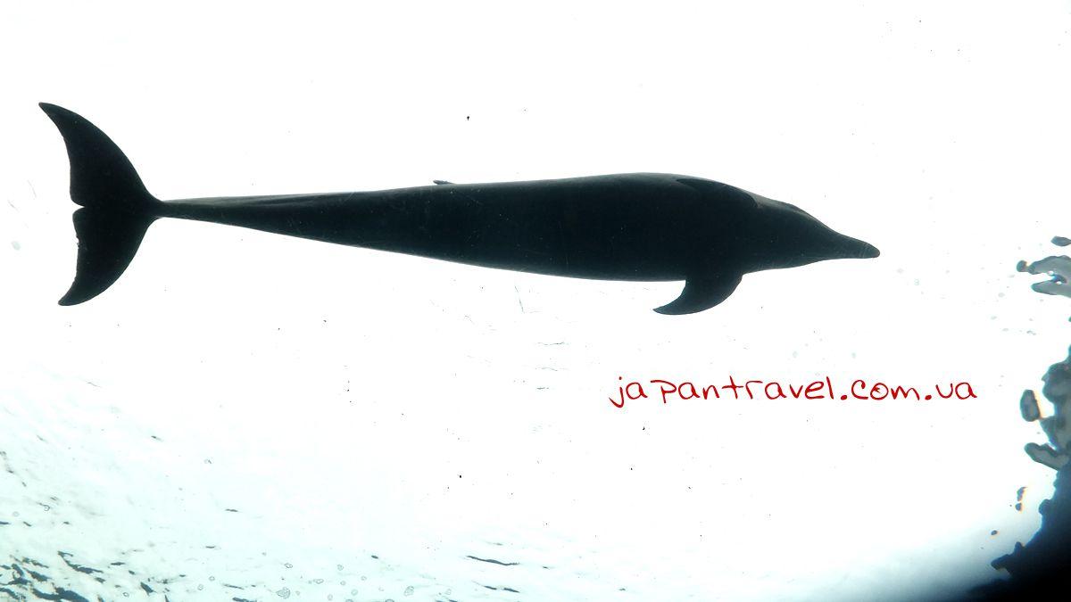 йокогама-сіперадайз-океанаріум-дельфін-Japan-Travel-мандрівки-японією