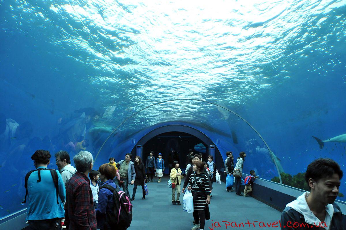 Yokohama-Hakkeijima-Sea-Paradise-дельфінарій-японський-акваріум-мандрівки-японією