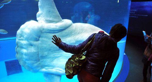Yokohama-Hakkeijima-Sea-Paradise-дивна-риба-японський-акваріум-мандрівки-японією