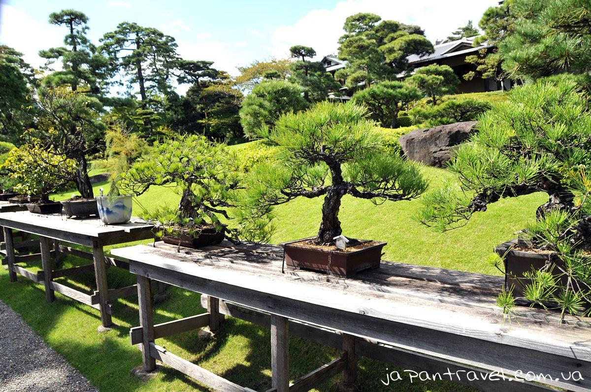 бонсай-мандрівки-японією-виставка-дерев