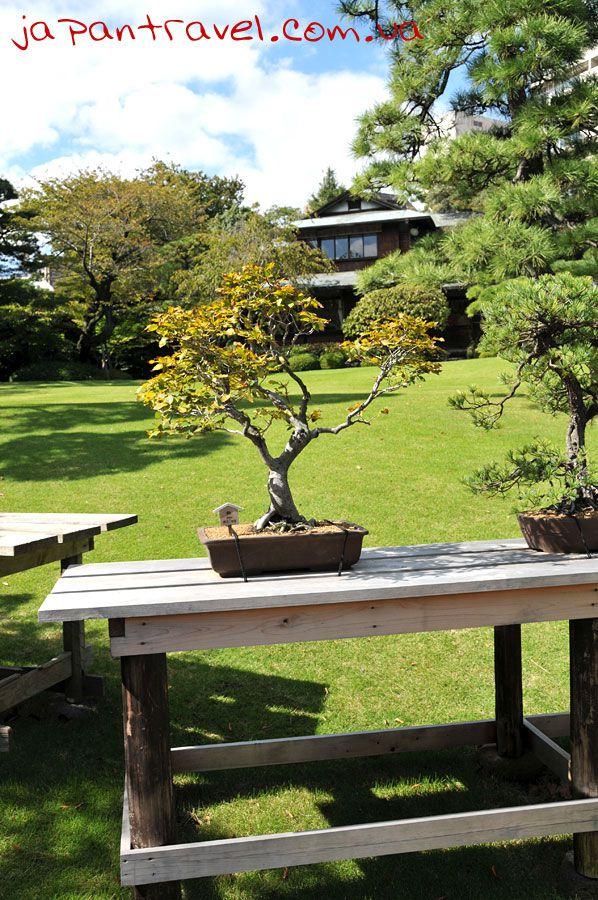 бонсай-мандрівки-японією