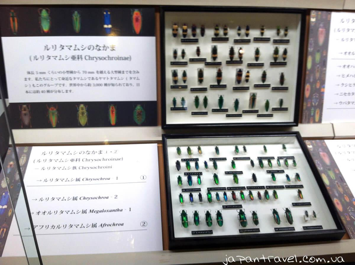 vystavka-zhukiv-muzej-jokosuka-mandrivky-yaponijeyu
