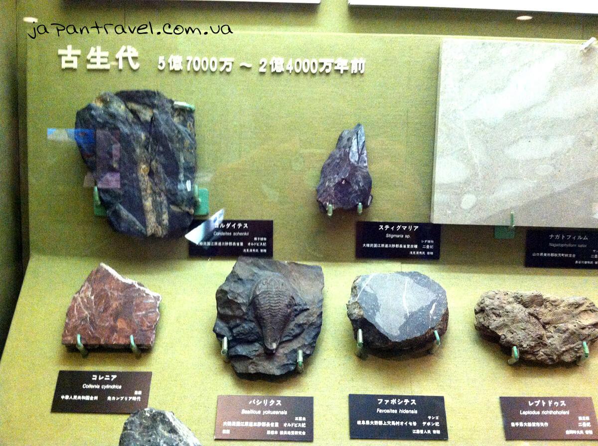 zakamyanili-zrazky-porid-muzej-jokosuka-mandrivky-yaponijeyu