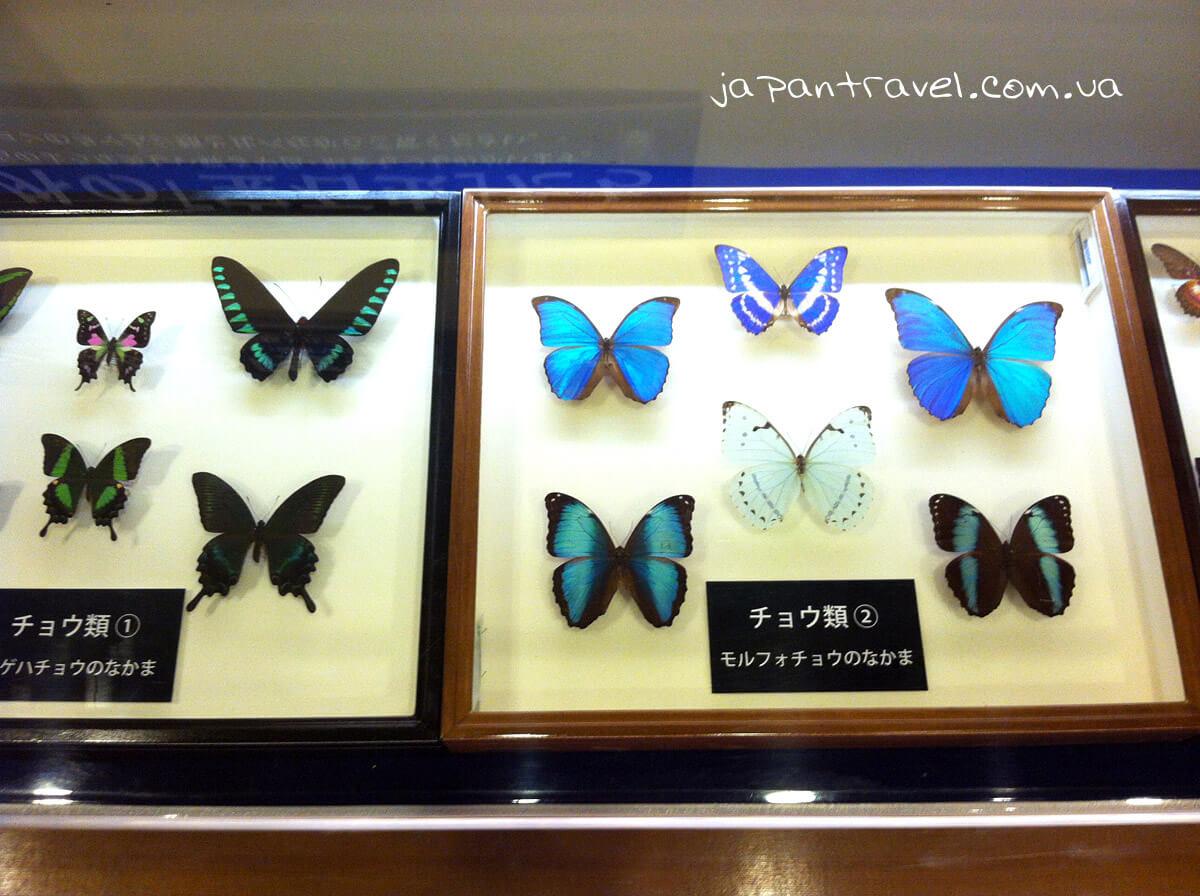 metelyky-muzej-jokosuka-mandrivky-yaponijeyu