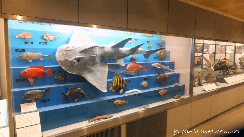 pidvodni-meshkantsi-ryby-muzej-jokosuka-mandrivky-yaponijeyu