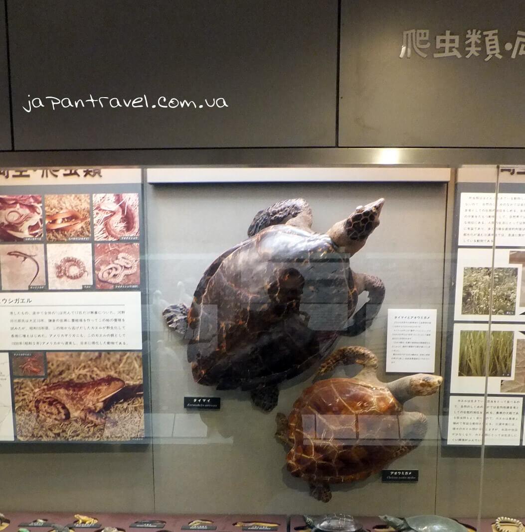 cherepahy-muzej-jokosuka-mandrivky-yaponijeyu